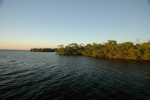 Rookeries in Tarpon Bay