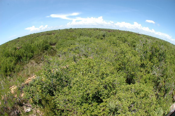 Fisheye view of some of the protected land from an observation tower, Sanibel Captiva Conservation Fund